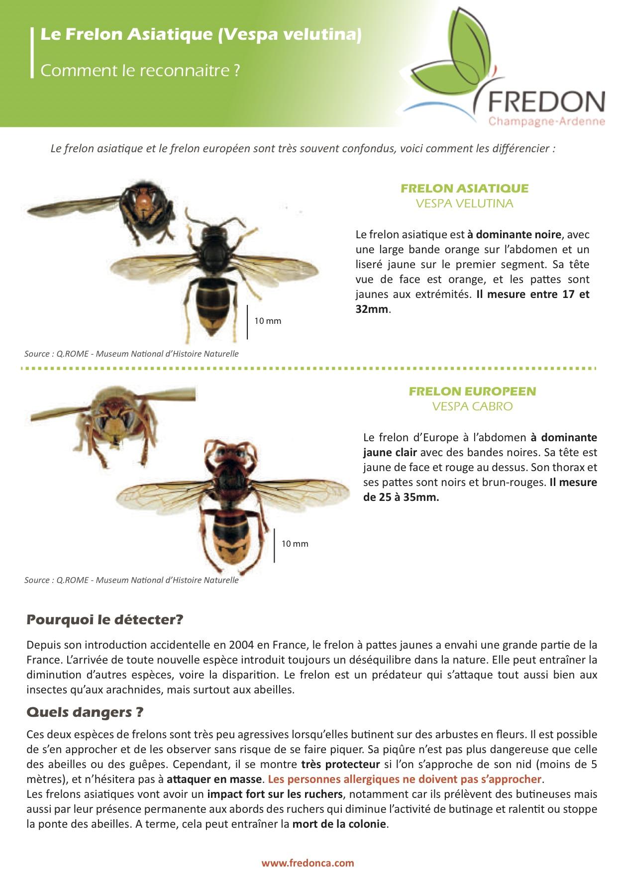 Environnement signaler les nids de frelons asiatiques - Je reste a votre disposition pour toutes informations complementaires ...